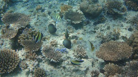 サンゴと魚たち.jpg