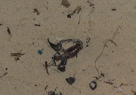 子ガメ孵化4.jpg