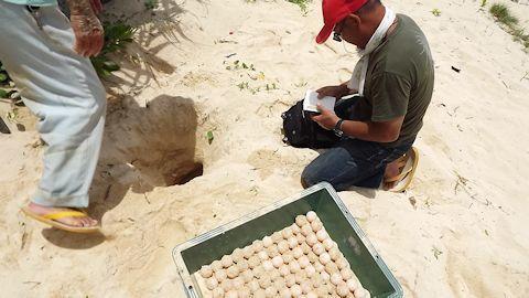 海がめの卵4.jpg