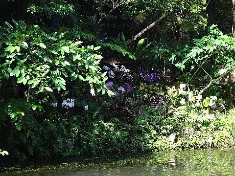 ビオスの丘 舟からの景色2.jpg
